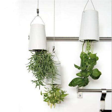 Decora la cocina con plantas deco vanguardia - Plantas aromaticas en la cocina ...